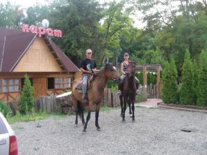 прогулка верхом на лошадях
